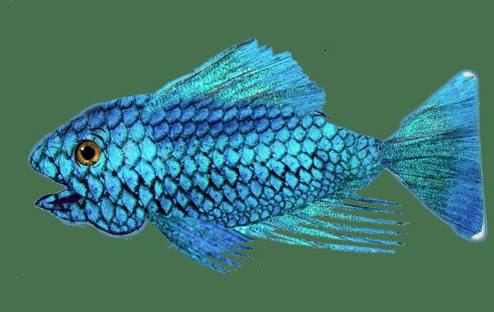 Fisken som hjelper deg med å skrive fortelling